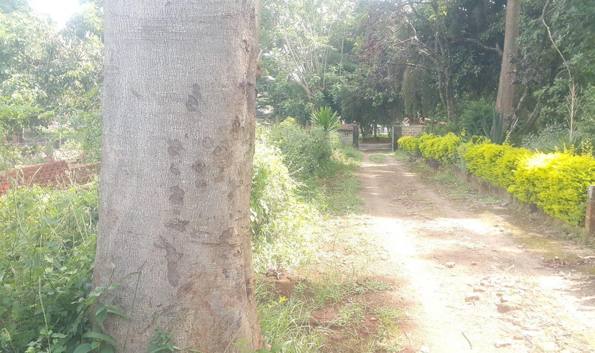 1 Acre Vacant Land For Sale – Westlands